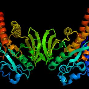 PTPN22: un gene per amico