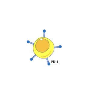 """Cellule T e PD-1: quando le cellule non sono per niente """"stanche"""", ma molto  """"attive"""""""