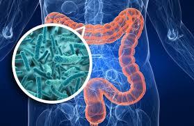 Intestino, batteri e diabete di tipo 1: nuove evidenze di una relazione pericolosa