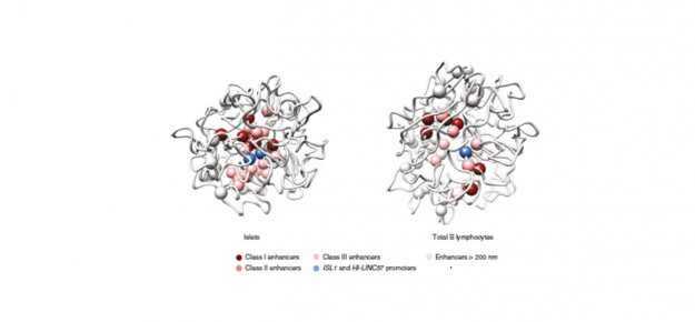 Svelata la mappa tridimensionale della architettura del DNA delle isole pancreatiche