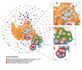 Le cellule beta pancreatiche rispondono all'infiammazione: implicazioni nello sviluppo del diabete di tipo 1