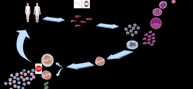 Cellule staminali per la cura del diabete: individuare chi può giovarsene